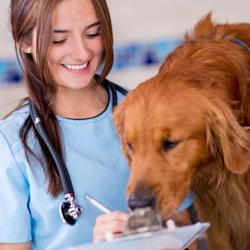 Veterinary Assistant jobs in Pakistan